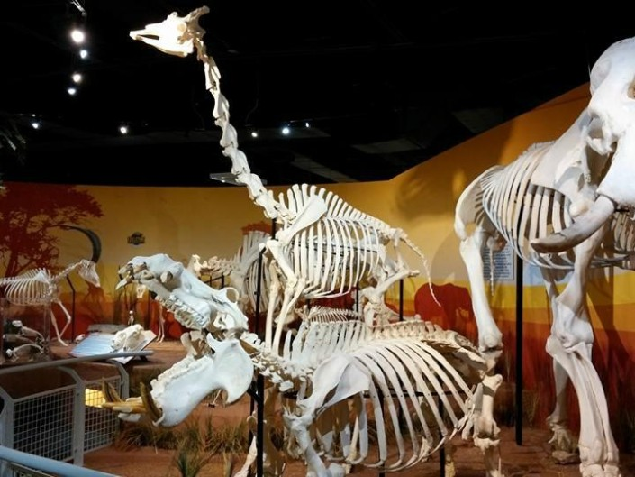 Skeletons: Animals Unveiled!